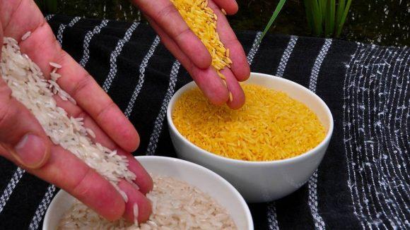 arroz-dorado-el-transgenico-por-el-que-109-premios-nobel-han-abroncado-a-greenpeace-580x326